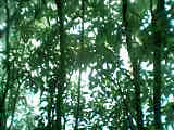 庭の立ち木